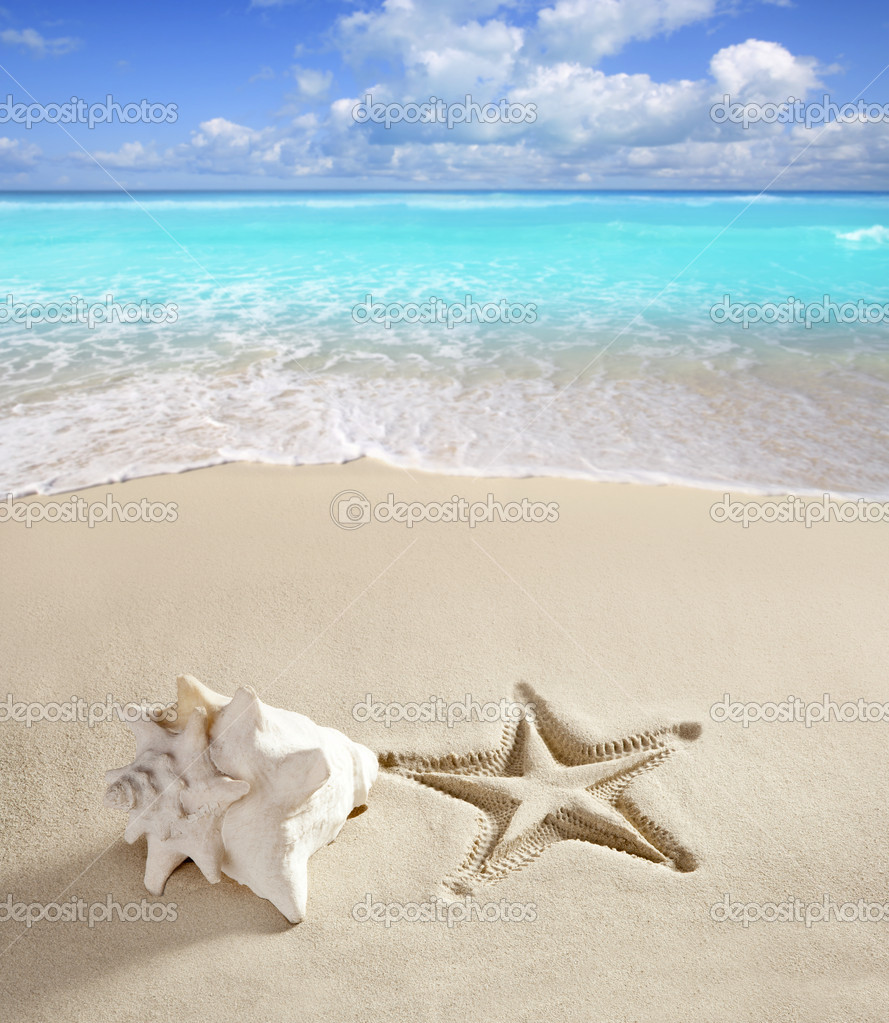 Caribbean beach starfish print shell white sand