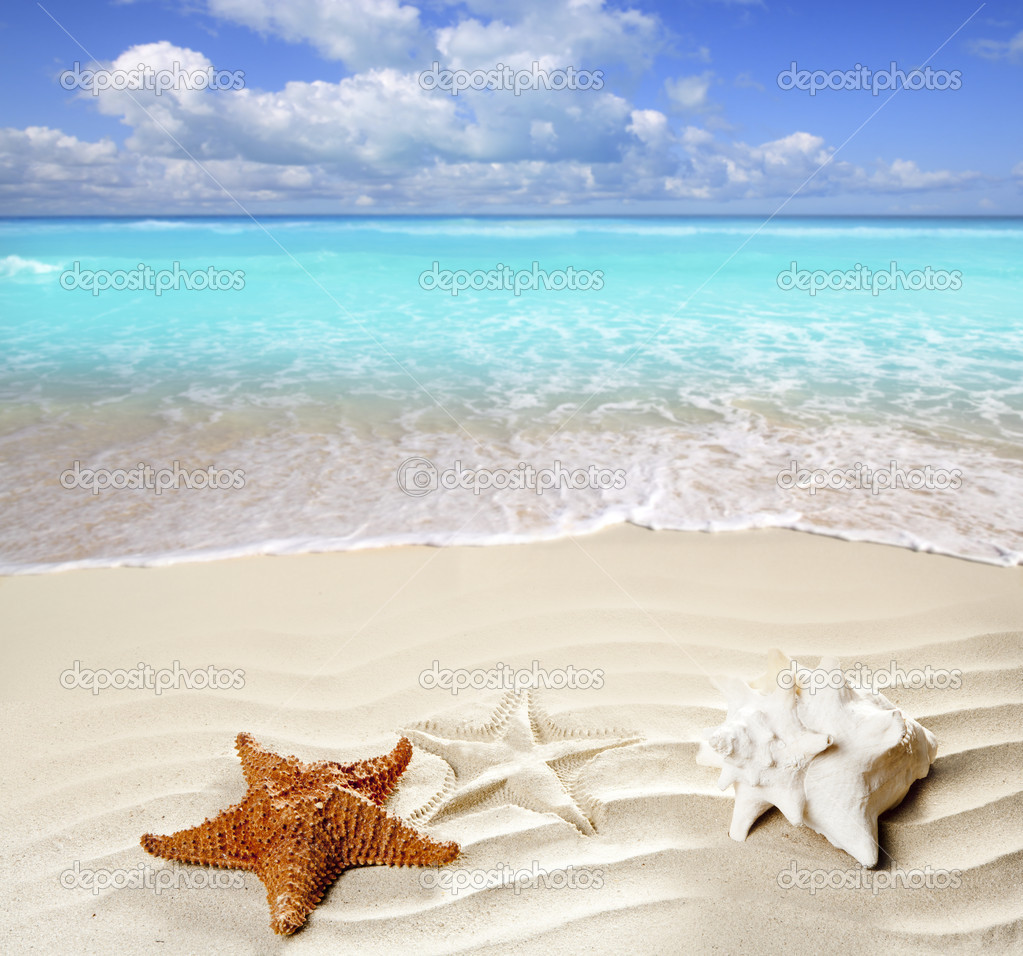 Caribbean tropical beach white sand starfish shell
