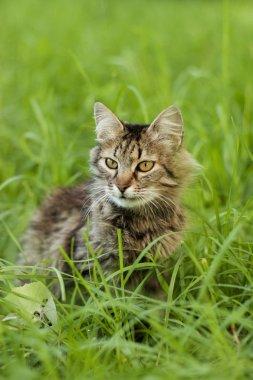 Gray cat walking on grass