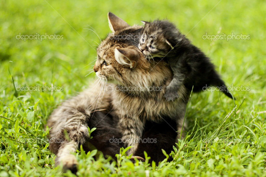 Female cat and her kittens