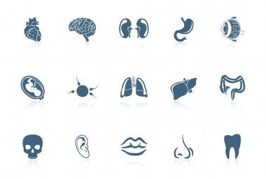 Human organs | piccolo series