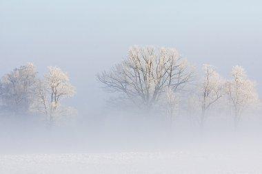 Milky winter