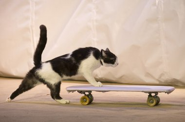 A cat with a skateboard