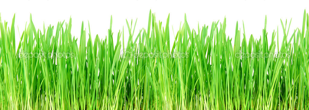 what does the i stand for in iphone seamless grass stock photo 169 buradaki 5664200 5608