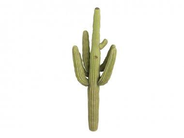 Saguaro or Carnegiea gigantea