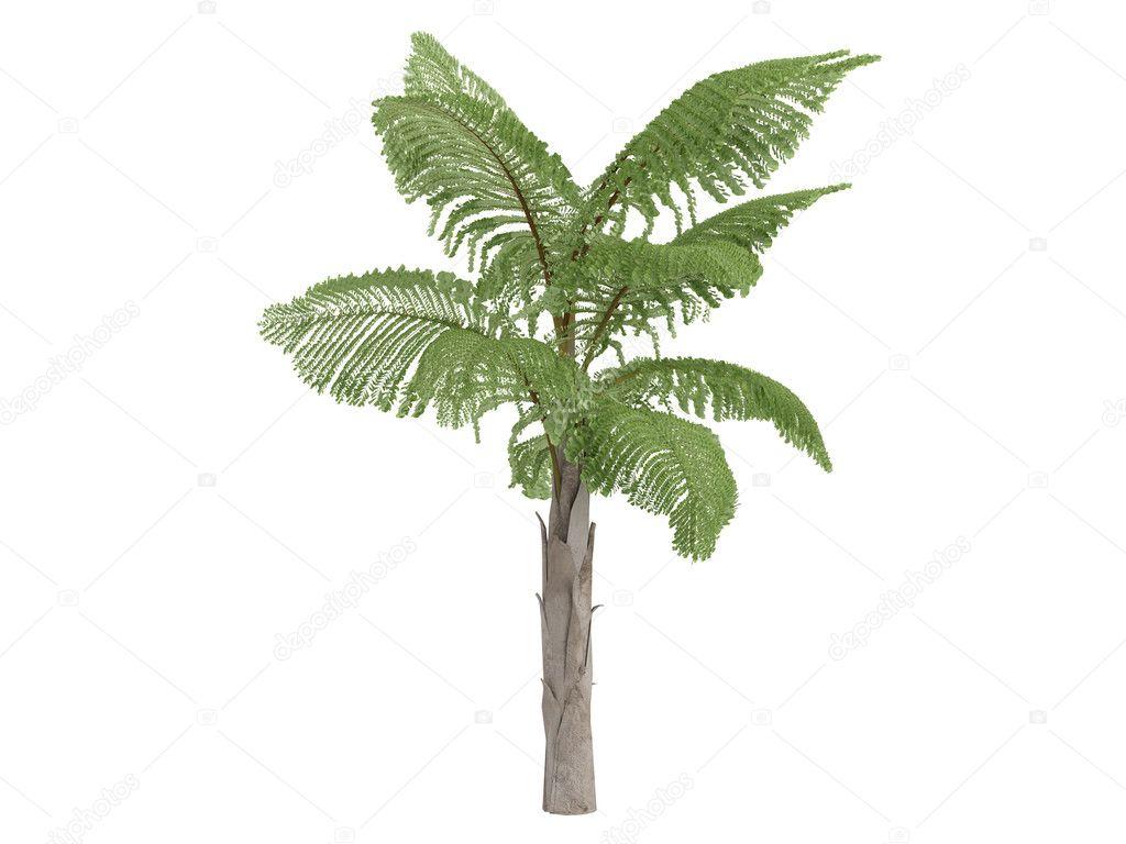 Giant Mountain Fishtail Palm or Caryota gigas