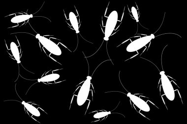 White cockroaches isolated on black background