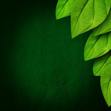 Green leaves on dark background