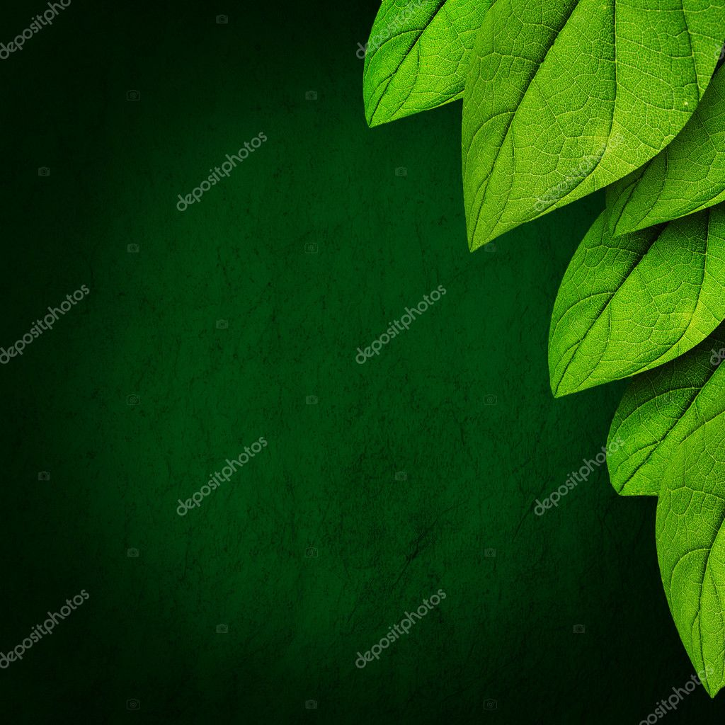 Green leaves on dark background