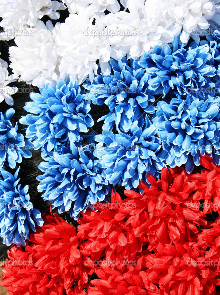 Three coloures of flag white blue red made from flowers stock three lines of flowers white blue and red colour flag of russia or france vertical photo by afonskaya mightylinksfo