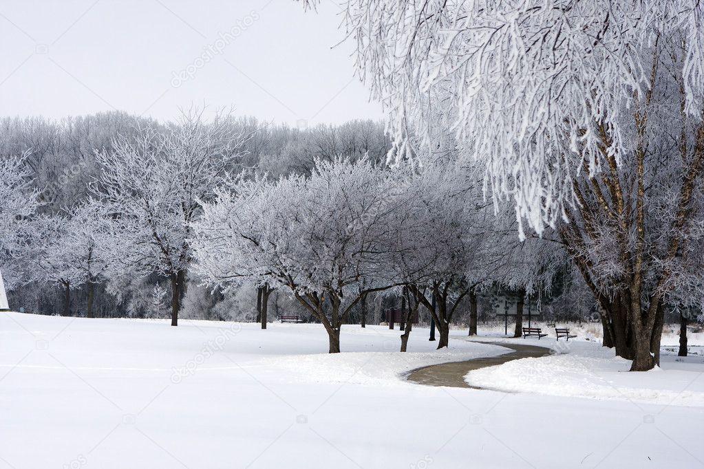 Fresh snow on park trees