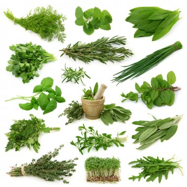 Fresh herbs collection