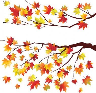 Autumn maple tree branche