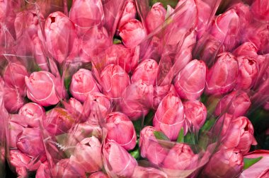 "Картина, постер, плакат, фотообои ""Многие букеты из тюльпанов"", артикул 5673730"