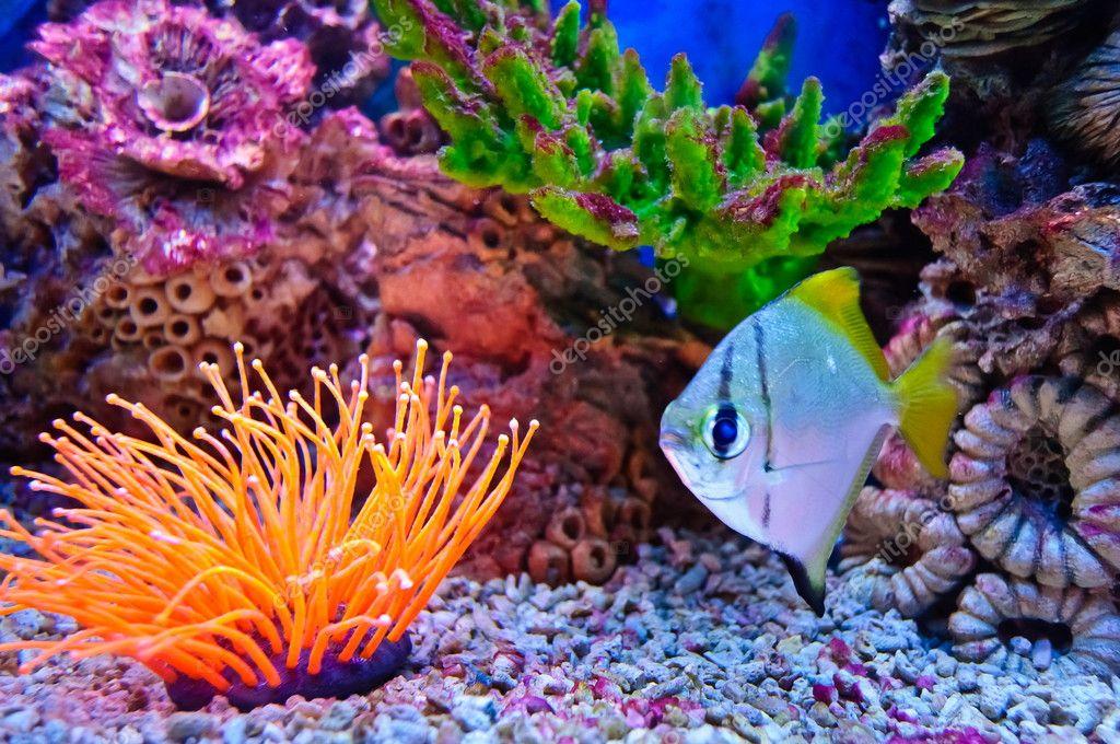 Peces marinos tropicales foto de stock borissos 6451493 - Peces tropicales fotos ...
