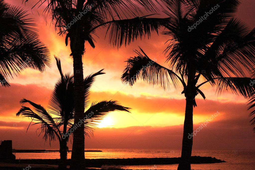 Red tropical sunset and palm