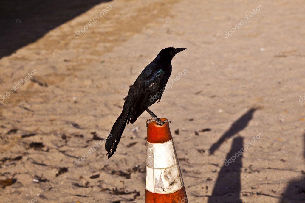 Tweeting bird on a pylon at the beach