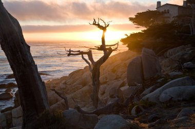Romantic sunset with tree on rock
