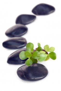 Massage Stones with Jade