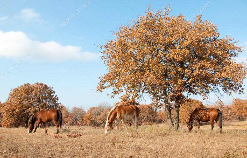 Serene scene of three horses grazing