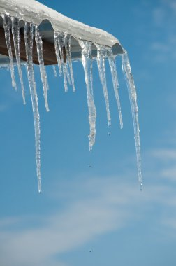 Thawing icicles with water drops falling against blue skies
