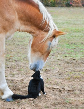 Friends nose to nose- huge and tiny
