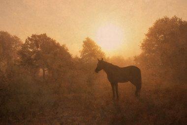 Silhouette of a sleeping Arabian horse in fog