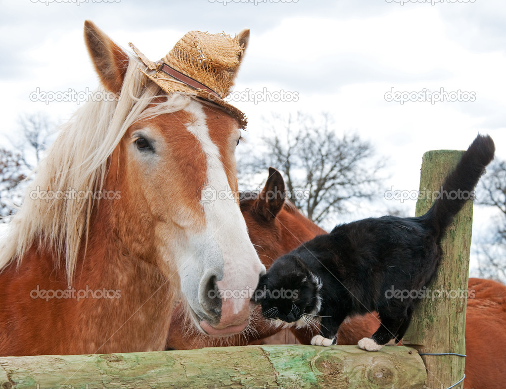 Belgian Draft horse wearing a silly worn out straw hat
