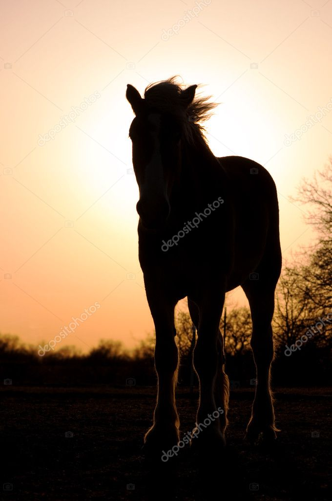 Belgian Draft Horse Silhouette Silhouette Of A Belgian Draft Horse Against Setting Sun Stock Photo C Okiepony 5869045