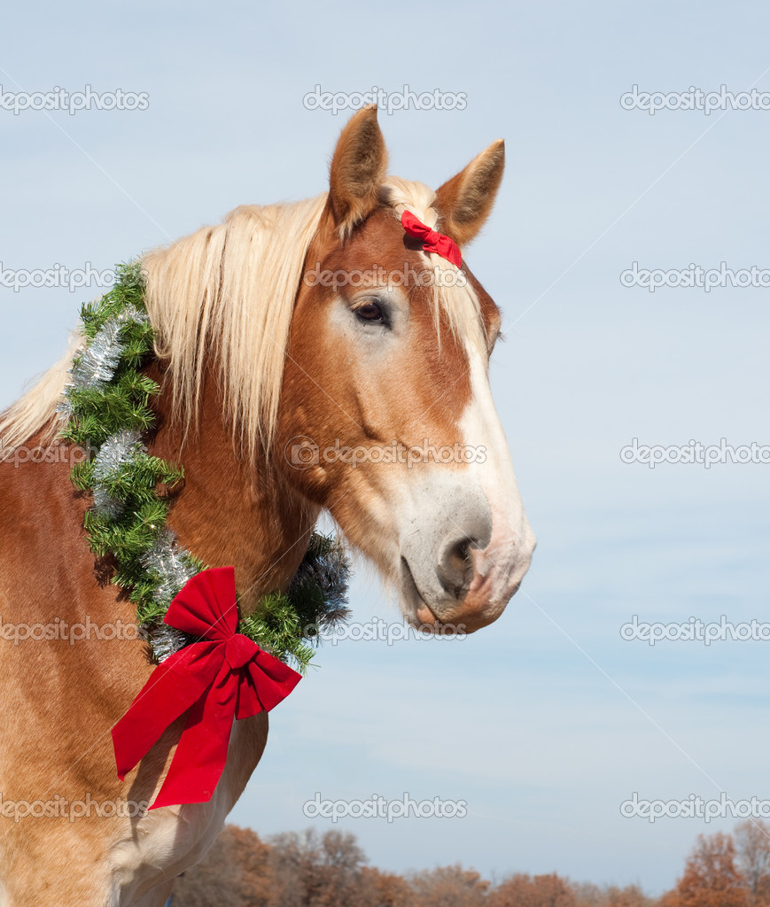 Beautiful blond Belgian Draft horse wearing a Christmas wreath