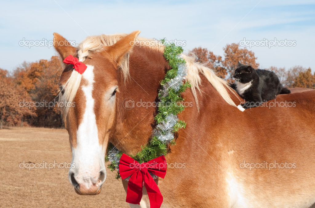Closeup image of a large Belgian Draft horse wearing a Christmas wreath