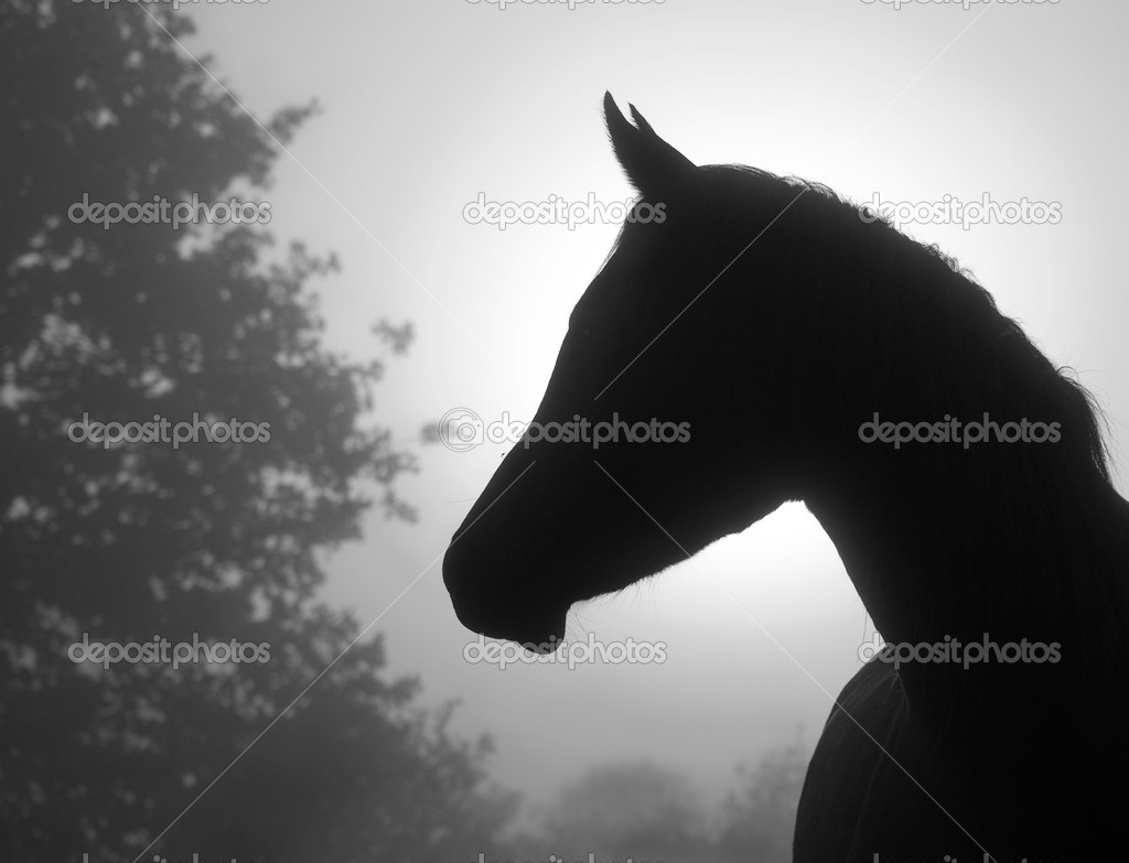 Beautiful image of a refined Arabian horse's profile