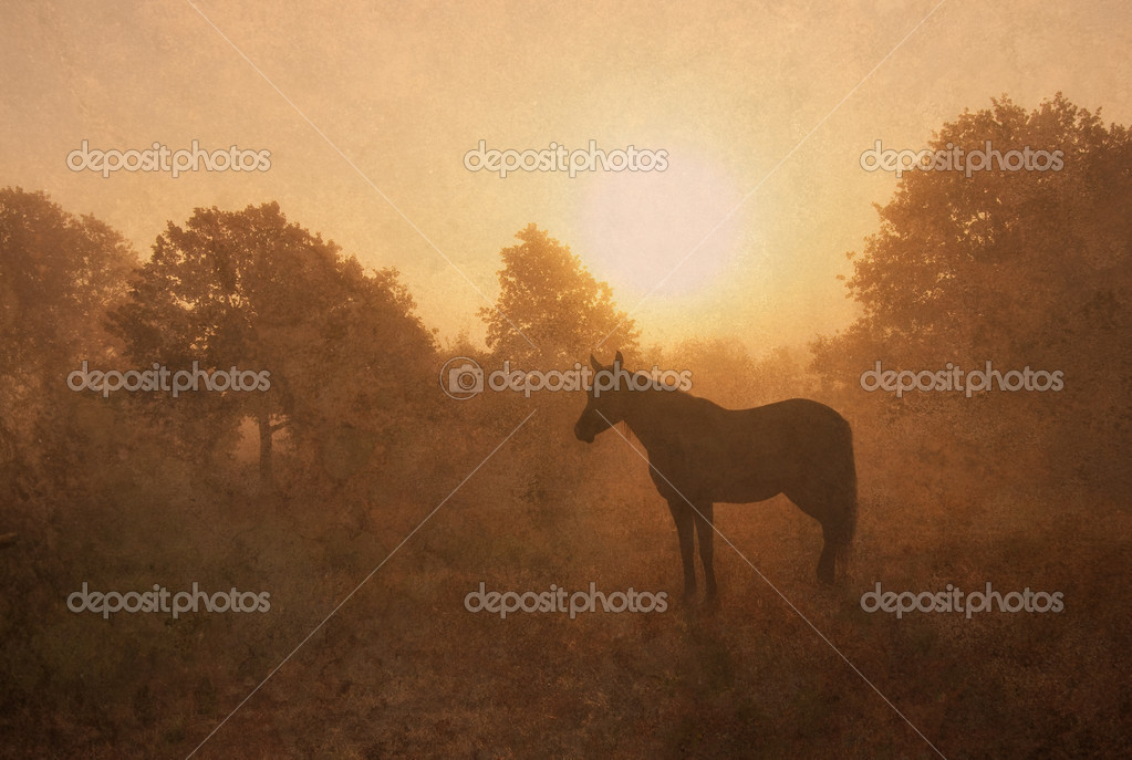 Silhouette of a sleeping Arabian horse in fog