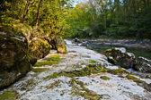 fiume valsarine che scorre tra il margine della foresta