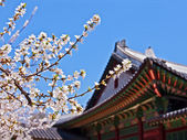 Photo Cherry blossoms in front of royal palace