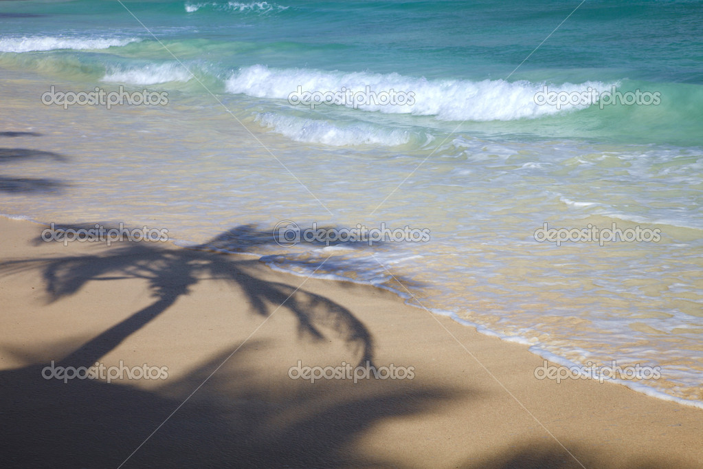 Caribbean Beach with palm tree shadow
