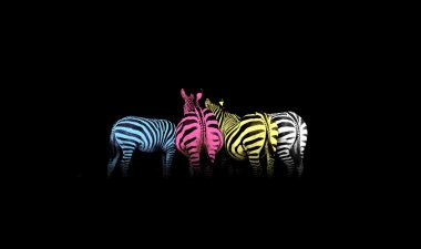 Cyan, magenta, yellow, and black (CMYK) colorful zebras (colored life) stock vector