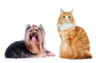 Cat and dog isolated on white