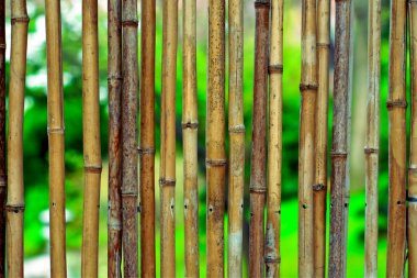 Bamboo background on green blurry background with copyspace