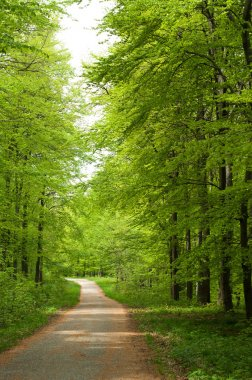Road in the forest at spring