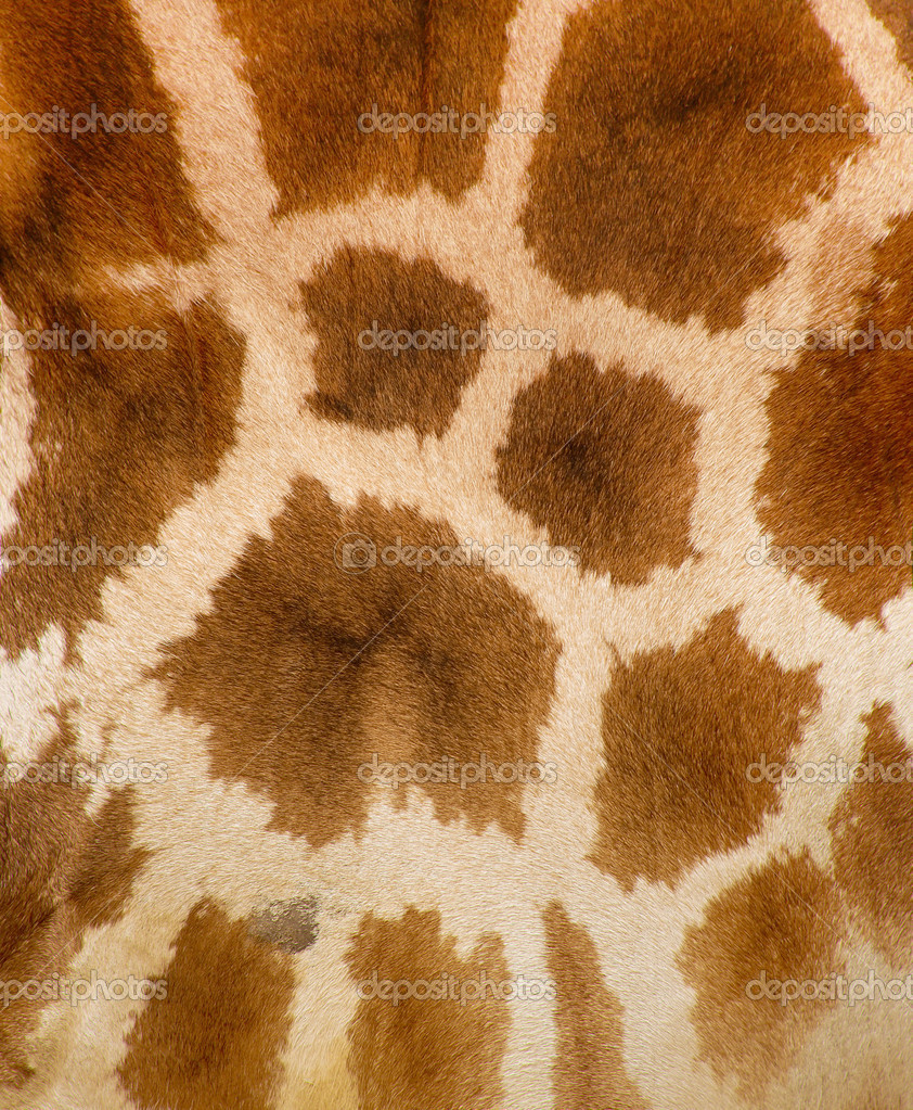 Authentic animal wool texture