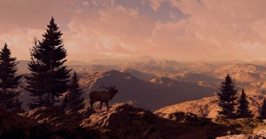 Elk In The Rocky Mountains