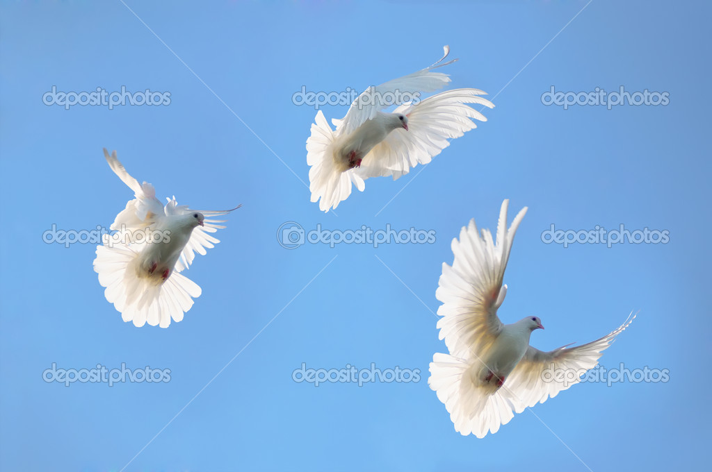 Group white doves in the sky