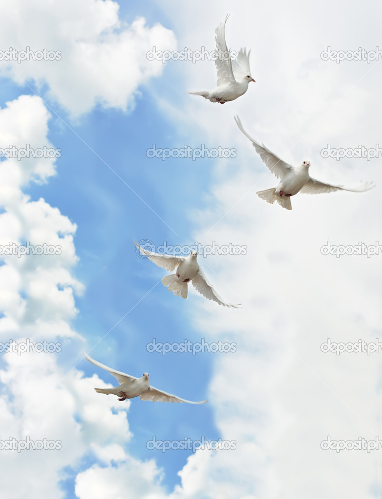 Group white doves