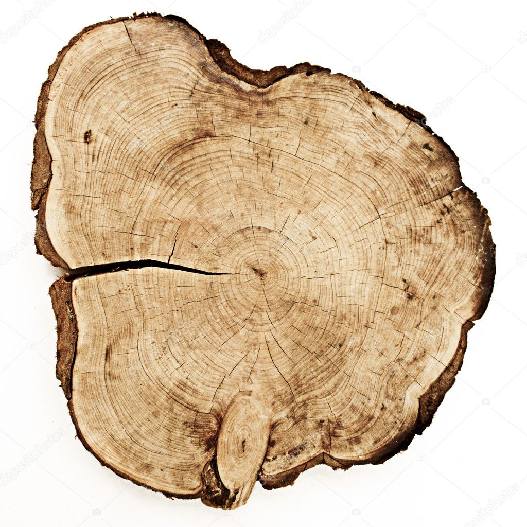 Tree trunk cut