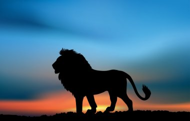 African lion in the sunset