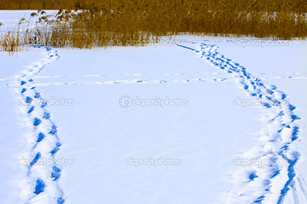 Traces on snow, leaders to canes on lake