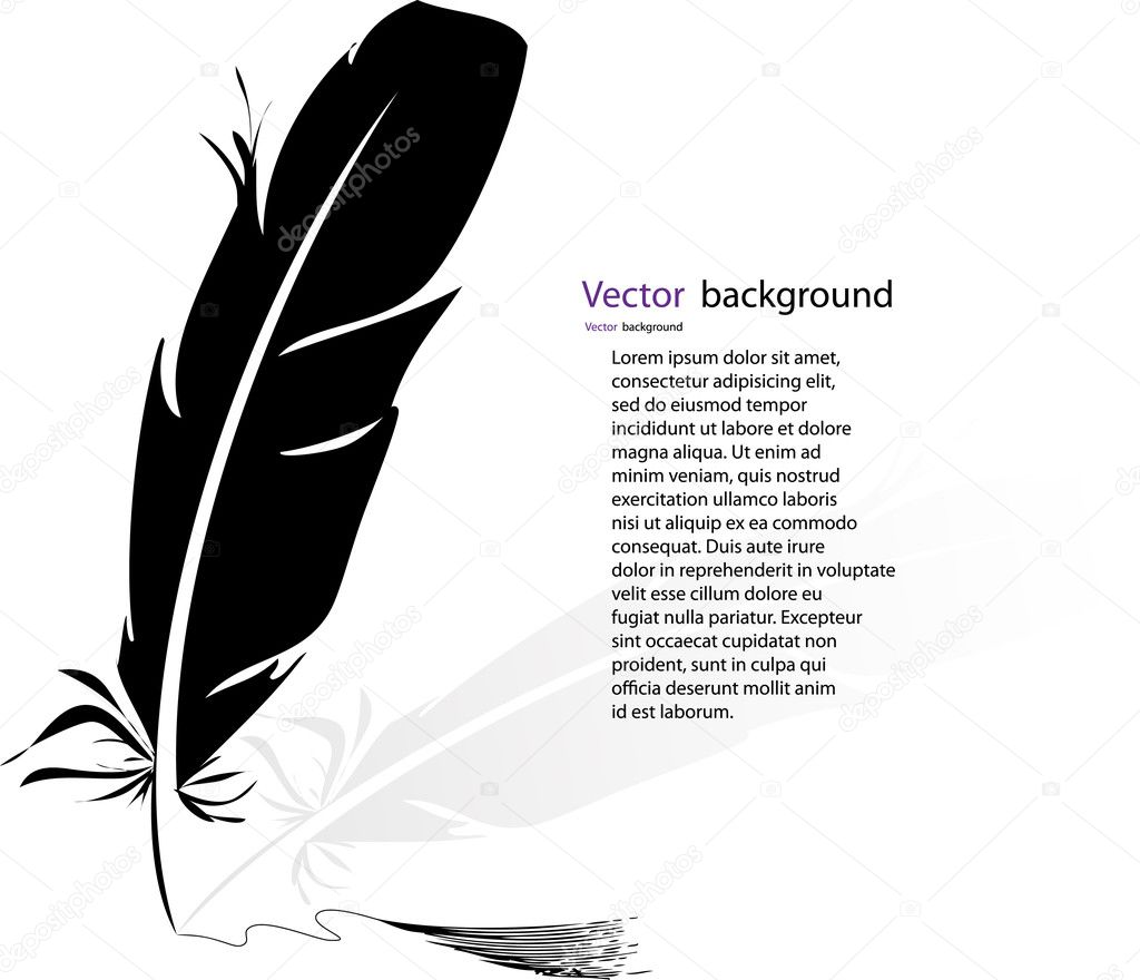 Black-and-white feather backgrounds. Vector format