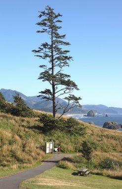 Lonsome tree in a park, Oregon coast