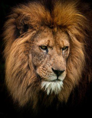Portrait of a king